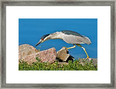 Night Heron At Ketring Lake Framed Print