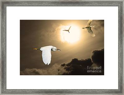 Night Of The White Egrets . Partial Sepia Framed Print by Wingsdomain Art and Photography