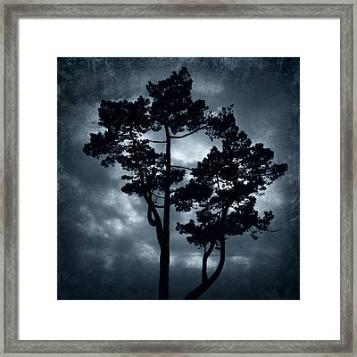 Night Tree Framed Print by Svetlana Sewell