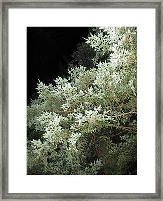 Night Trees Framed Print by Lali Partsvania
