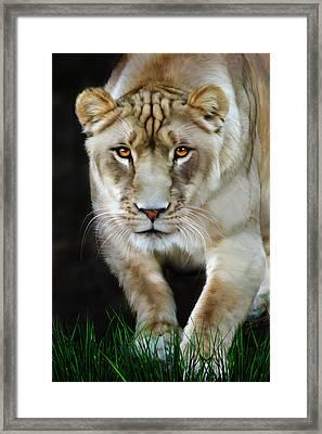 Nikita Framed Print by Big Cat Rescue