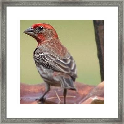 #nikon #ig_birdlovers #birdsofinstagram Framed Print