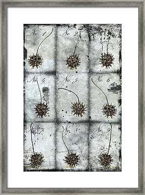 Nine Seed Pods Framed Print by Carol Leigh