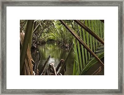 Nipa Palms Line A Channel Framed Print by Tim Laman