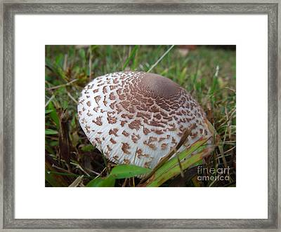 Nipple Shroom Framed Print by Linda Seacord