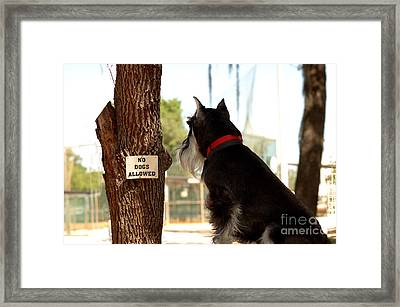 No Dogs Allowed Framed Print
