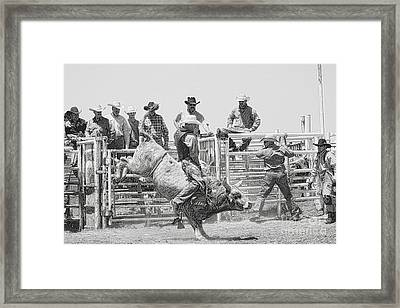 No Fear In Black And White Framed Print by Rachelle Rice