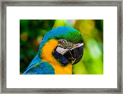 No More Crakers Framed Print