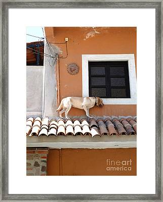 No More Tequila Framed Print
