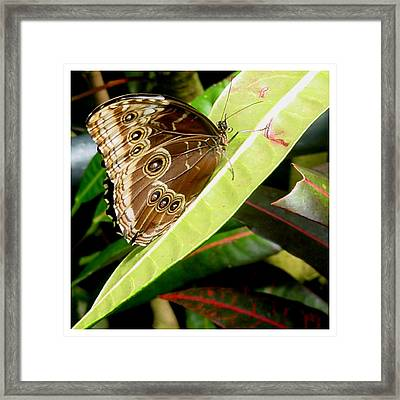 Framed Print featuring the photograph No Nectar Here by Frank Wickham