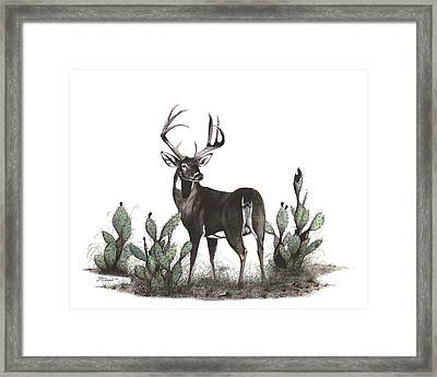 No Tail Framed Print by Steve Maynard