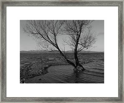 No Tree Is An Island Framed Print by Jeff Moose
