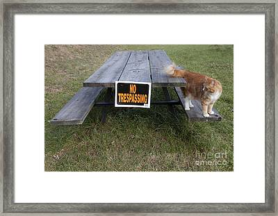 Framed Print featuring the photograph No Trespassing by Jeannette Hunt