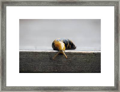 No Way Down Framed Print by Luis Esteves