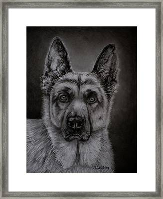 Noble - German Shepherd Dog  Framed Print