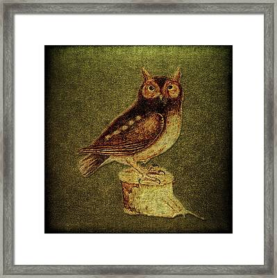 Noctua Aurita Minor Framed Print by Li   van Saathoff
