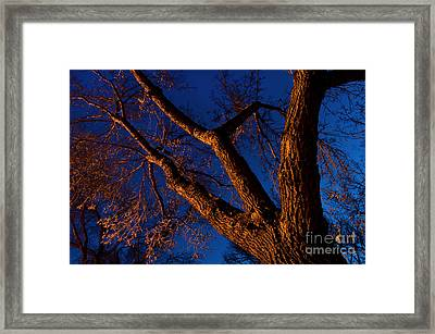 Nocturnal 6 Framed Print