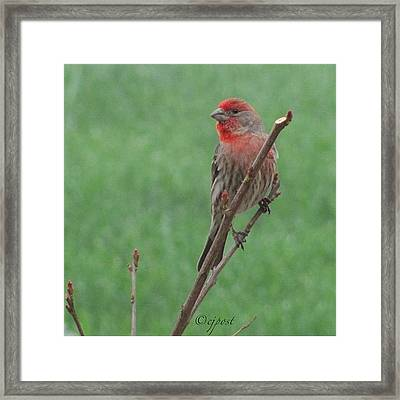 #nofilter Pretty Little Male Framed Print