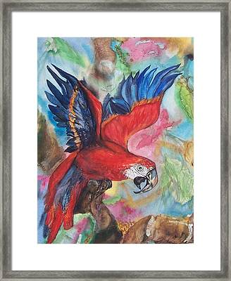 Noisy Parrott  Framed Print by Phyllis Barrett