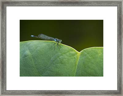 Non Distressed Damsel Framed Print by Jean Noren