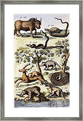 North America: Fauna Framed Print