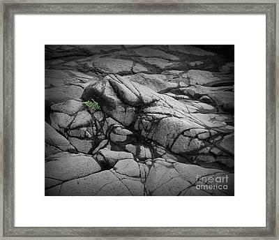 North Shore Fern Framed Print