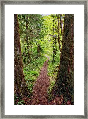 North Umpqua Trail Framed Print by Tyra  OBryant