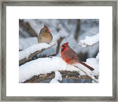 Northern Cardinal Pair 4284 2 Framed Print by Michael Peychich