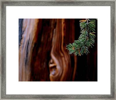 Northern Exposure.. Framed Print by Al  Swasey
