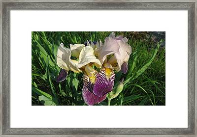 Northern Iris  Framed Print by Waldemar Okon