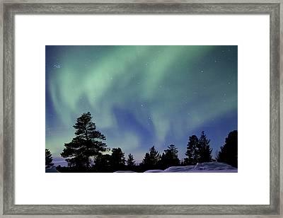 Northern Lights Over Trees Framed Print by Richard McManus