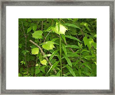 Framed Print featuring the photograph Northern Woodlands by Sheila Silverstein