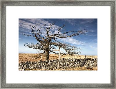 Northumberland, England A Leafless Tree Framed Print by John Short