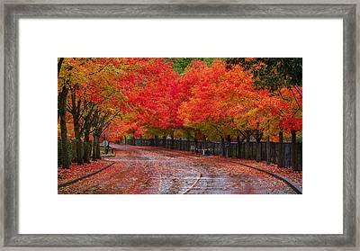 Northwest Autumn Framed Print by Ken Stanback
