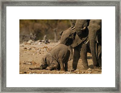 Nose Bump Framed Print