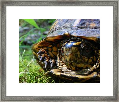 Framed Print featuring the photograph Nosey Turtle by Chad and Stacey Hall