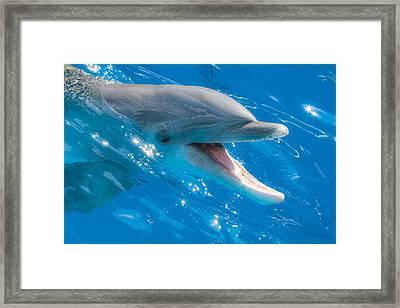 Not A Fish Framed Print