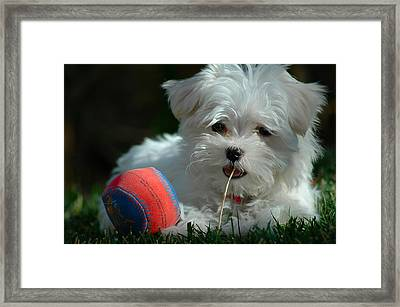 Not Just Sugar And Spice Framed Print by Lynn Bauer