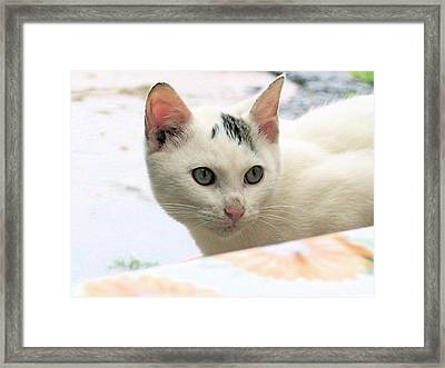 Not Me Framed Print by Inga Smith