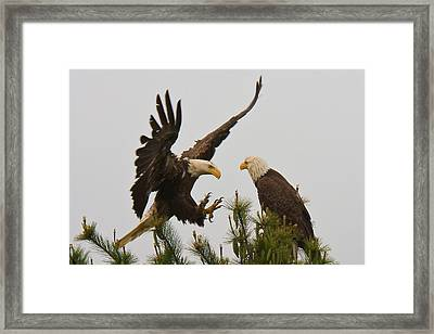 Not Now Framed Print