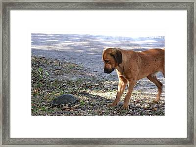 Not Share A Bout This Framed Print by Katrina Johns