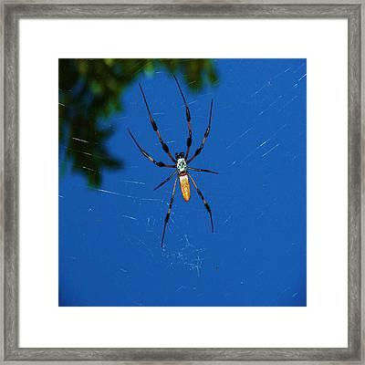 Not-so Itsy-bitsy Spider Framed Print