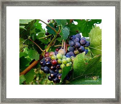 Framed Print featuring the photograph Not Yet by Lainie Wrightson