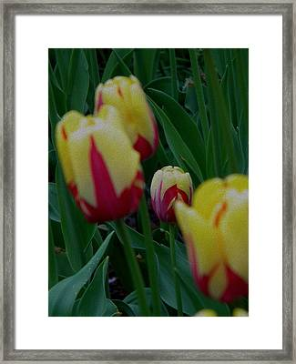 Noticeable Framed Print