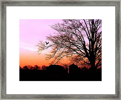Framed Print featuring the photograph November Hawk by Kimberleigh Ladd