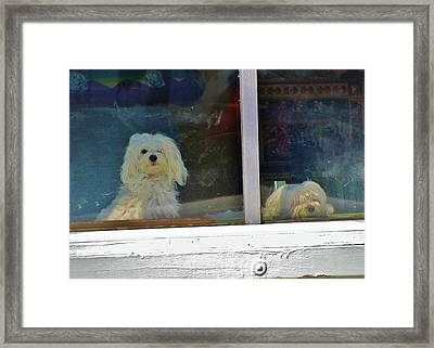 Now And Later Framed Print by Christine  Fifer