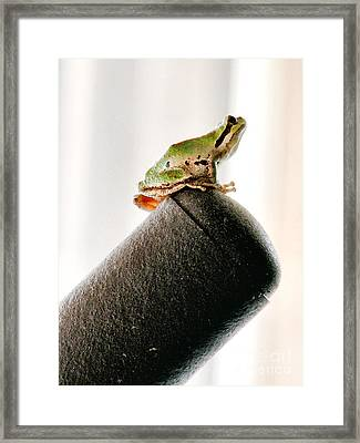 Now What? Framed Print by Rory Sagner