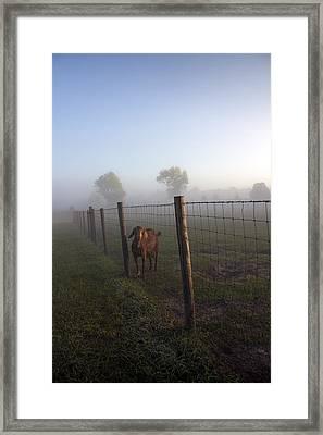 Nubian Goat Framed Print