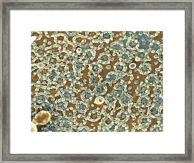 Nuclear Pore Complexes, Sem Framed Print by