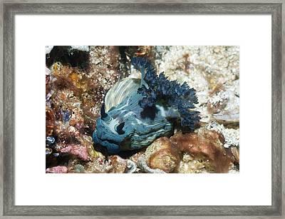 Nudibranch Framed Print by Georgette Douwma